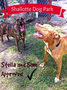 PM Pups at dog park shallotte approved (1)